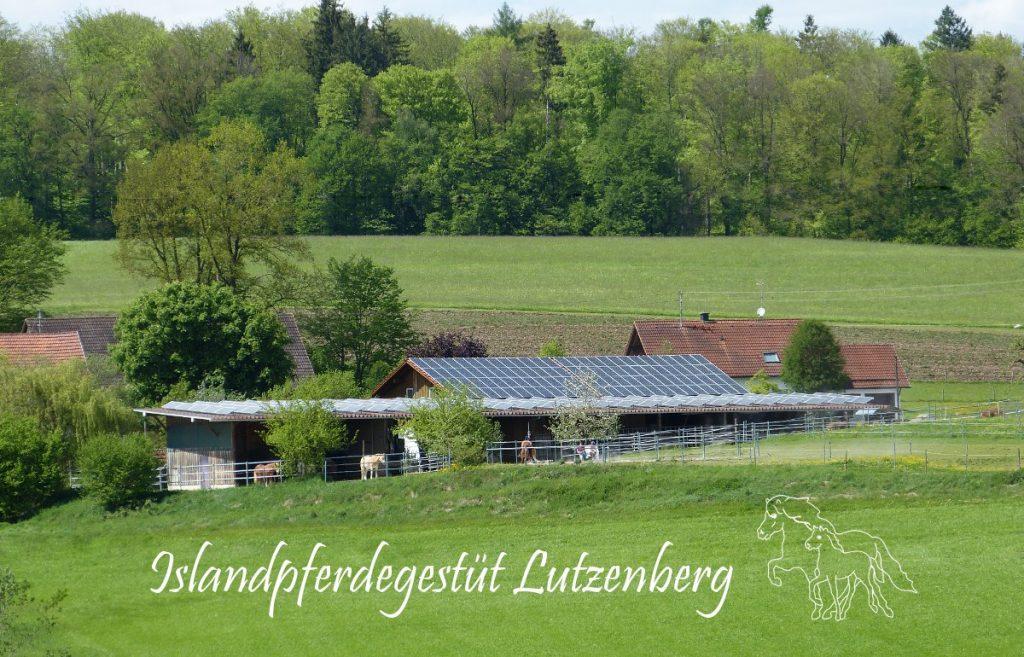 Keppeler-Hof - Islandpferdegestüt - Islandpferde von Lutzenberg